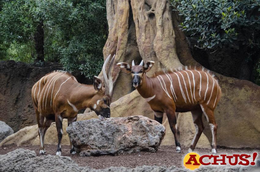 Bioparc Valencia comparte los cumpleaños de las crías de dos especies en peligro crítico de extinción