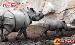 Terra Natura Benidorm homenajea la figura materna en los animales con motivo del Día de la Madre