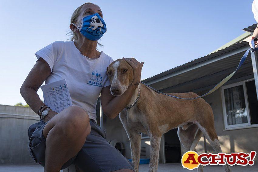 """El 18º Desfile """"virtual"""" de perros abandonados de A.U.P.A y Bioparc Valencia llega a miles de personas"""