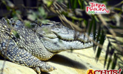 Terra Natura Benidorm celebra el Día Mundial de los Cocodrilos para concienciar sobre sus amenazas de conservación