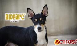 El Desfile de perros abandonados A.U.P.A y Bioparc Valencia será el 22 de junio