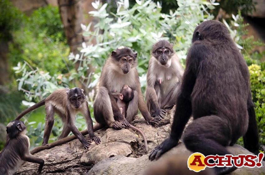 Bioparc Valencia conmemora el Día del Medio Ambiente con el nacimiento de un primate en grave peligro de extinción