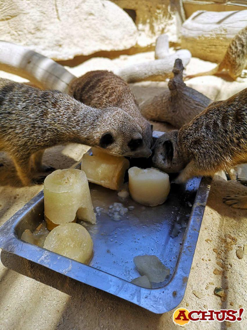 Las especies de Mundomar combaten las altas temperaturas con refrescantes y nutritivos helados