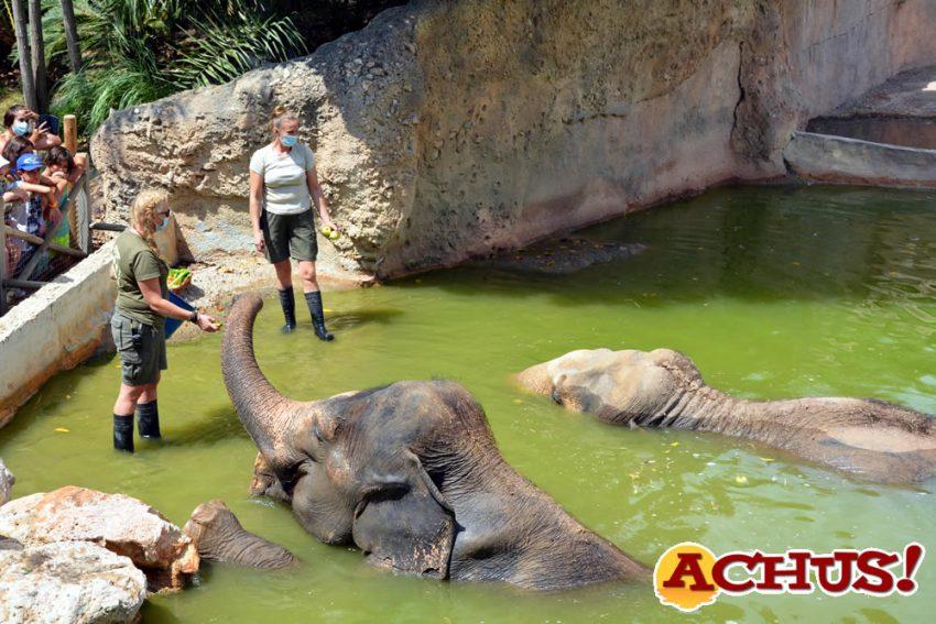 La elefanta Petita de Terra Natura Benidorm celebra su 49º aniversario con un gran postre de fruta