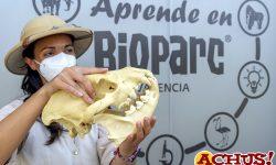 """La oferta escolar de Bioparc Valencia para el nuevo curso es """"en tu aula o en la mía"""""""