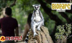 "Bioparc Valencia premio ""Travellers' Choice 2021"" de Tripadvisor"