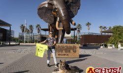 David Casinos, «se viste» la camiseta oficial de la  9ª Can-rrera de Bioparc Valencia